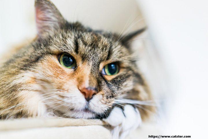 Assist Your Cat Live Longer